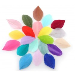 Plumes lisses colorées