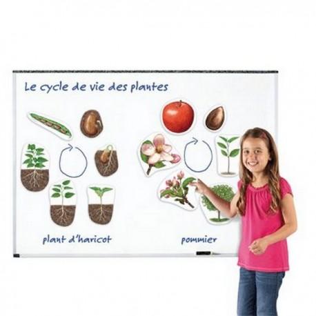 Cycles de la vie végétale magnétique